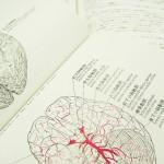 あなたの潜在能力を120%引き出す。脳の上手な使い方!