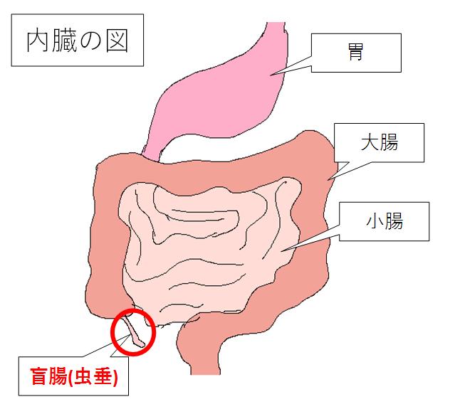 盲腸(虫垂)