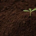 「その努力は半年後に芽を出す」という感覚を持てば、努力は続く!